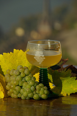 White Wine from the Rhine River